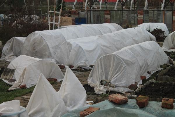 укрытие роз на зиму 2